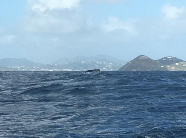 whale south shore