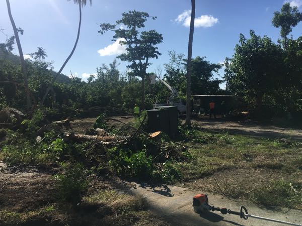 Crews were cutting down dead trees Friday afternoon.