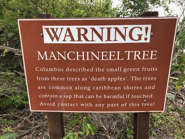 The Manchineel Tree: Its Story & Why You Shouldn't Touch It 2